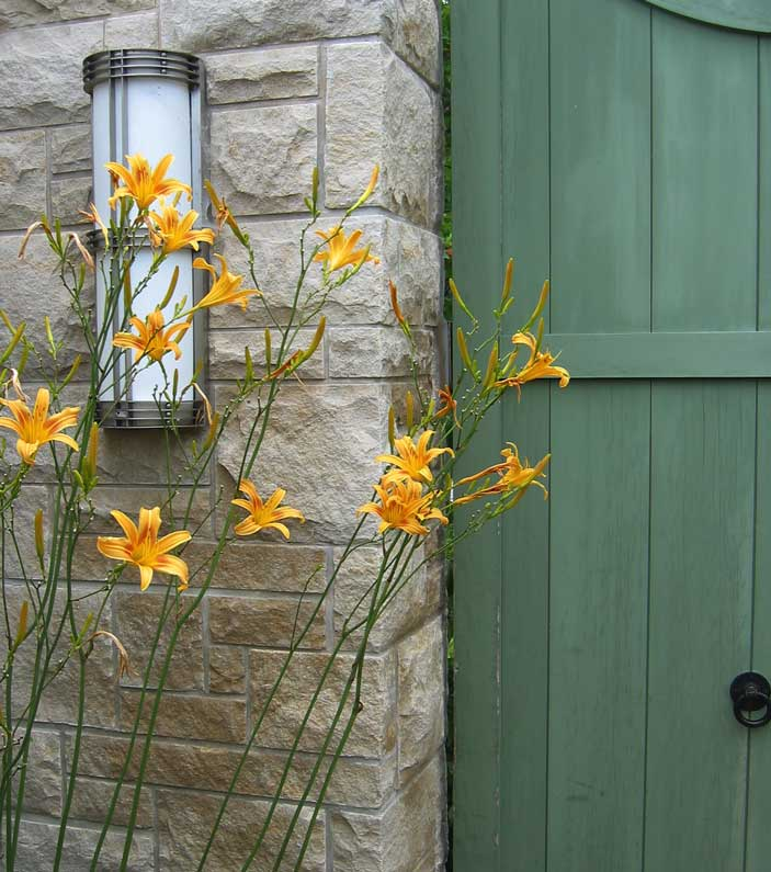 These are very tall lilies. <br /> Growing next to this stone wall and green gate  <br /> they seemed like a perfect combination of form, texture and color.