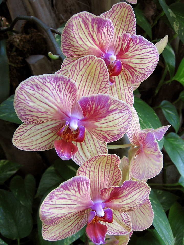 One of the orchids in the conservatory.