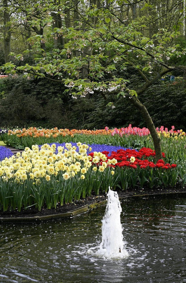 Fountain with tulips