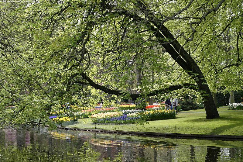 "The pond in the <a href=""http://www.keukenhof.nl/"">Keukenhof</a>"
