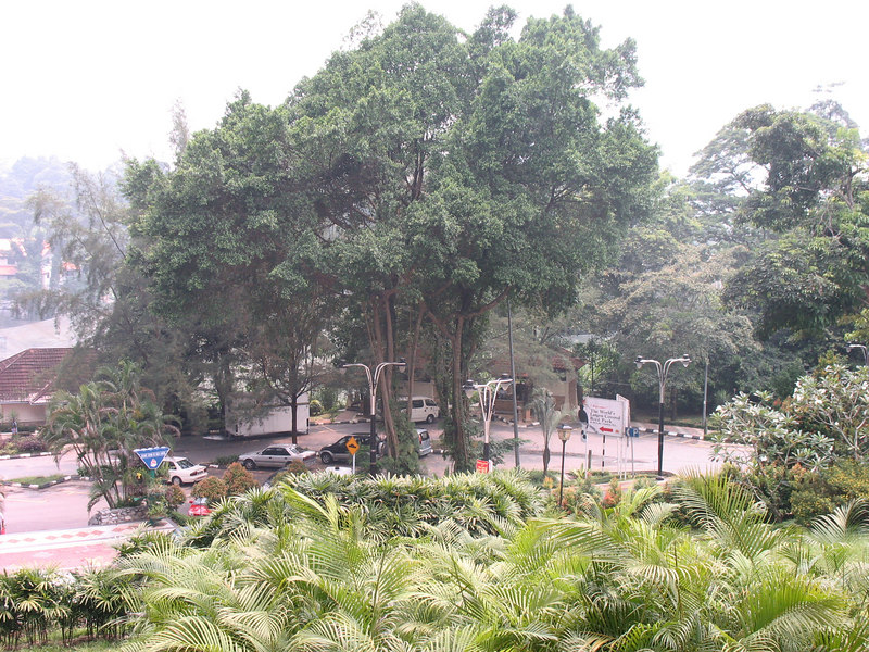 View from Orchid garden to the bird sanctuary.