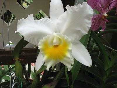 Kuala Lumpur -- Orchid Garden