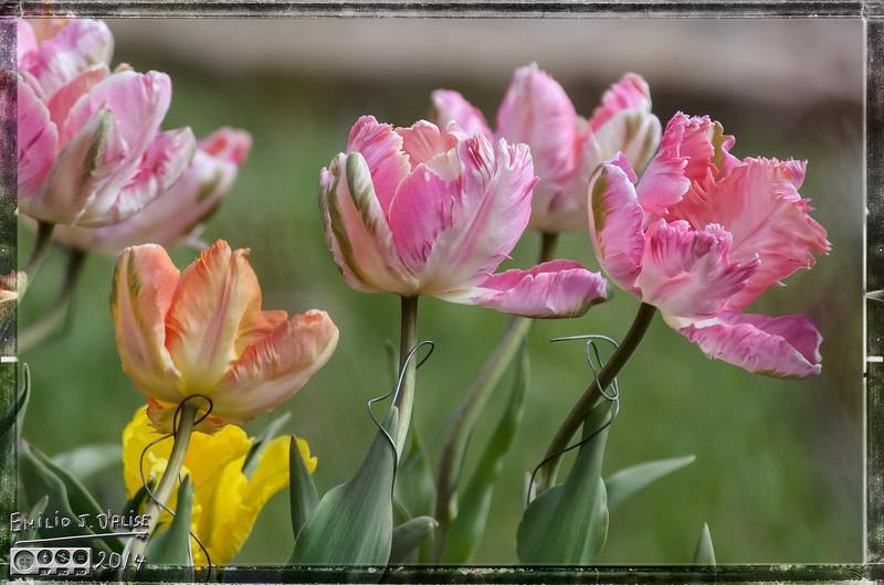 Flowers, birds, clouds,