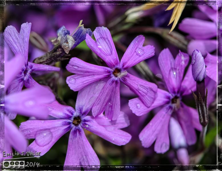 birds, flowers,
