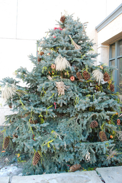 """This was a """"bird feeder"""" tree outside the building."""