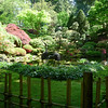 Rhododendron garden-1000059