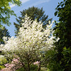 Rhododendron garden-1000068