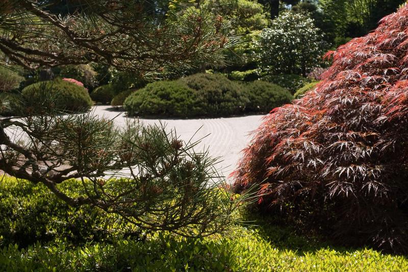 Rhododendron garden-1000070