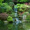 Rhododendron garden-1000061