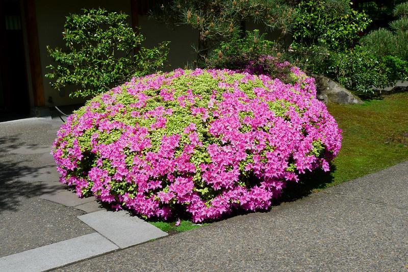 Rhododendron garden-1000056