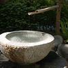 Rhododendron garden-1000064