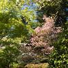 Rhododendron garden-1000069