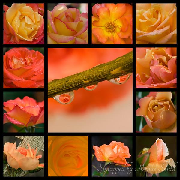 Rosy Abundance