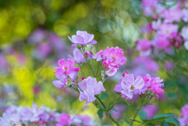 Garden Wonders II
