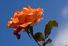 Floral Virtue