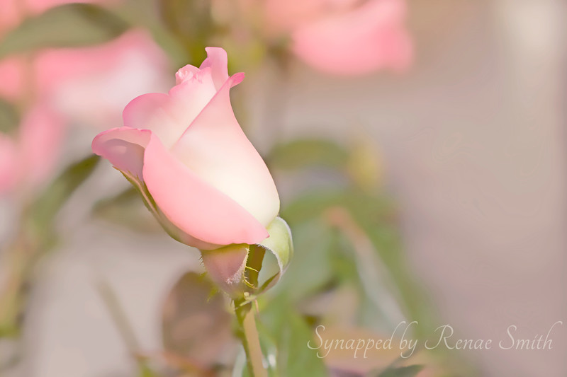 When the Flowers Whisper