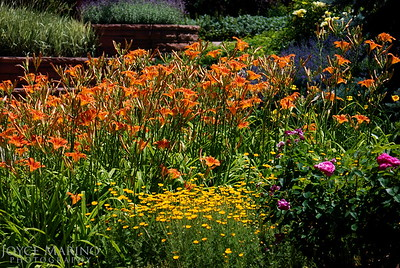 Summer garden -- DSC_0514