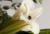 Flower White Easter Lilly 8019.02