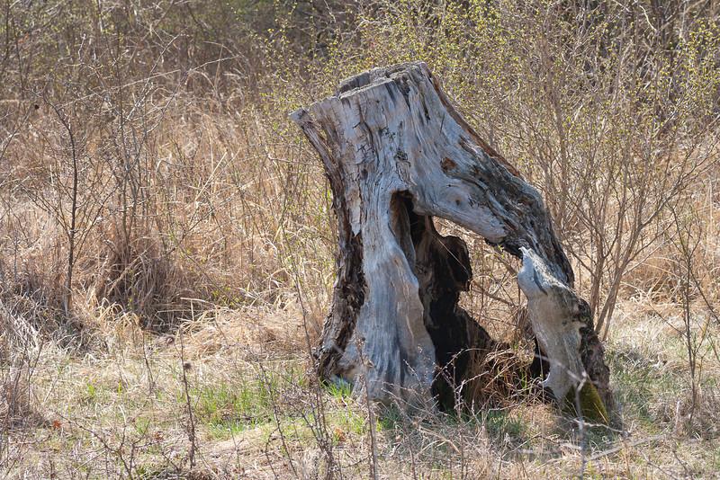 Baumstumpf auf Heißlände
