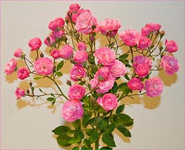 Moreys Pink 101709