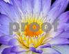 IMG_6094 BYO WL V2 DC 14 300dpi