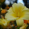 Lys-Flowers-Mariage_NM (15)