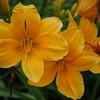 Lys-Flowers-Mariage_NM (02)