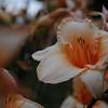 Lys-Flowers-Mariage_NM (10)