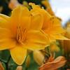 Lys-Flowers-Mariage_NM (04)