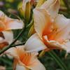 Lys-Flowers-Mariage_NM (08)
