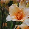 Lys-Flowers-Mariage_NM (13)