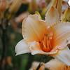 Lys-Flowers-Mariage_NM (11)