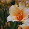Lys-Flowers-Mariage_NM (12)