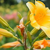 Lys-Flowers-Mariage_NM (17)