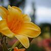 Lys-Flowers-Mariage_NM (19)