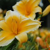Lys-Flowers-Mariage_NM (16)