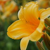 Lys-Flowers-Mariage_NM (22)
