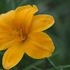 Lys-Flowers-Mariage_NM (60)