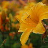 Lys-Flowers-Mariage_NM (06)