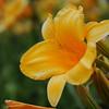 Lys-Flowers-Mariage_NM (21)