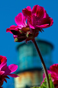 Geranium flowers macro lighthouse