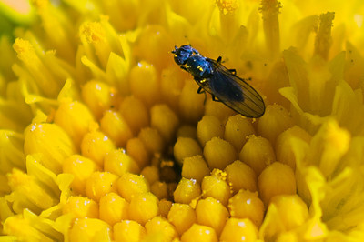 Fly flower micro