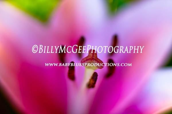 Bouquet of Flowers - 31 Dec 11