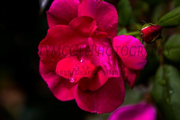 Drops Of Color - 02 Sep 2012