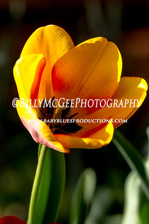 Sunset Flowers - 03 Apr 12