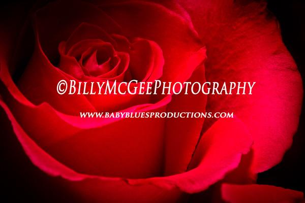 Valentines Day - 14 Feb 2011