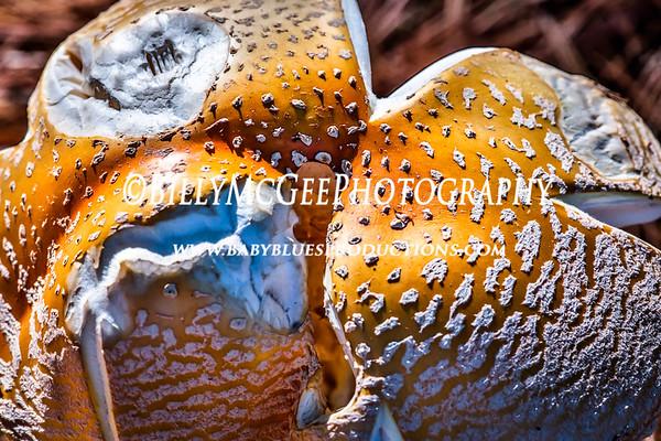 Wild Mushrooms - 26 Oct 2014