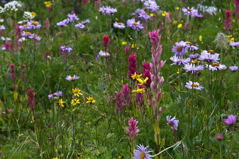 Wildflowers in the Canadian Rockies