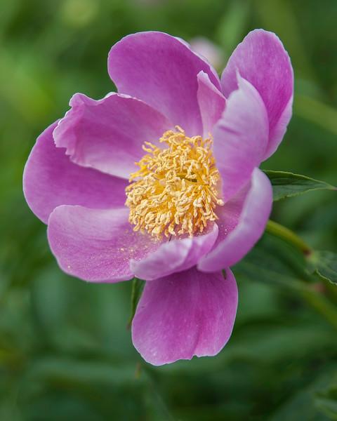 Marlene Blew's Flowers