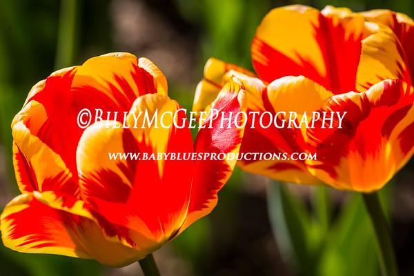 Sherwood Gardens - 26 Apr 2013